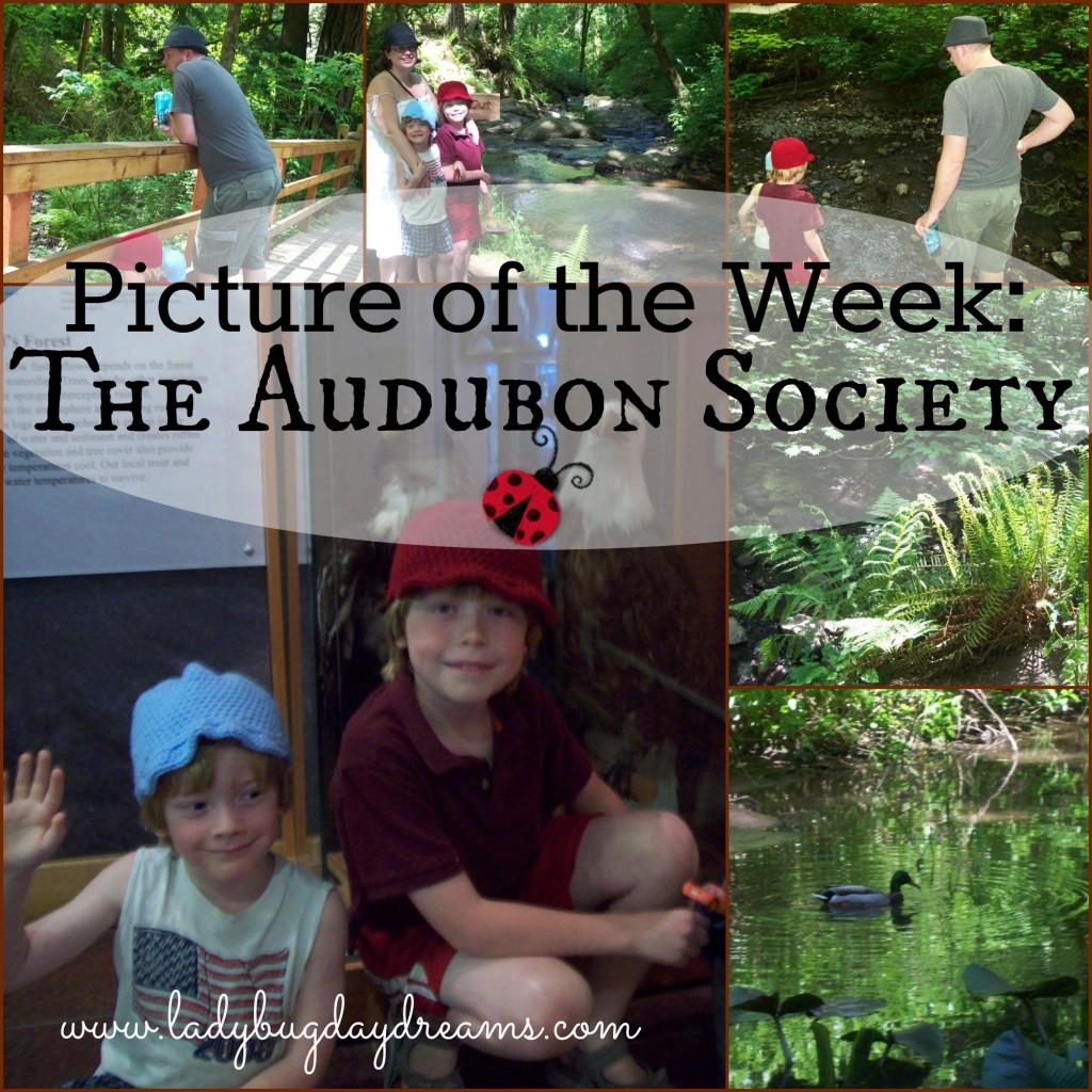 audubon trip collage