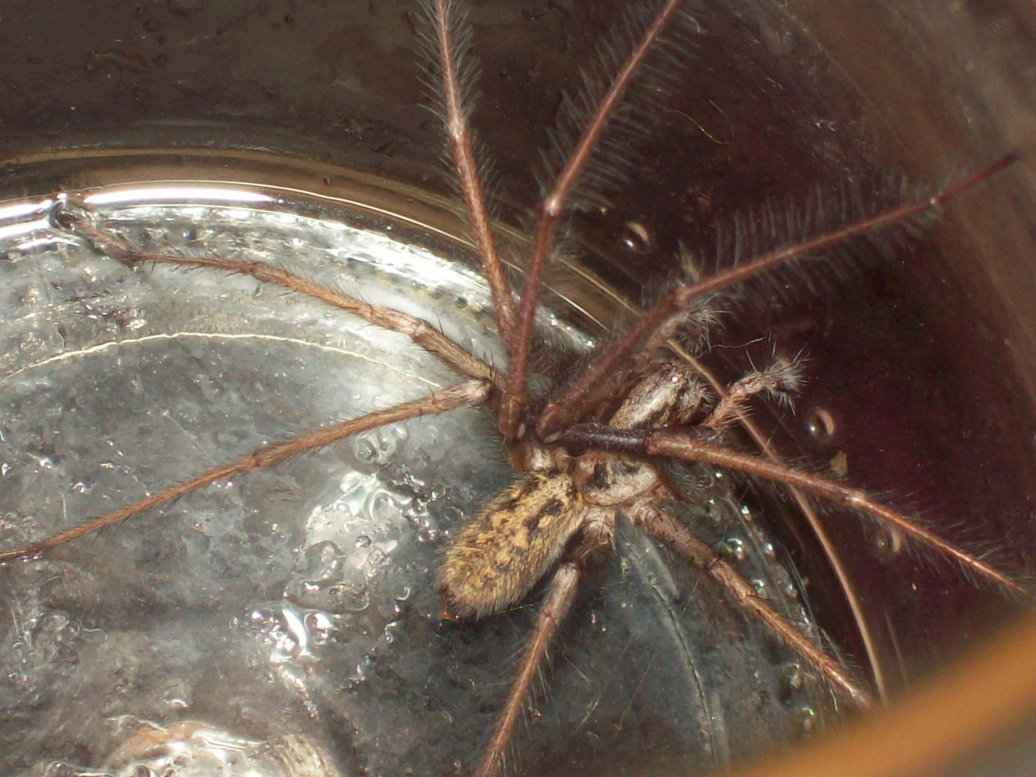 spider picture1